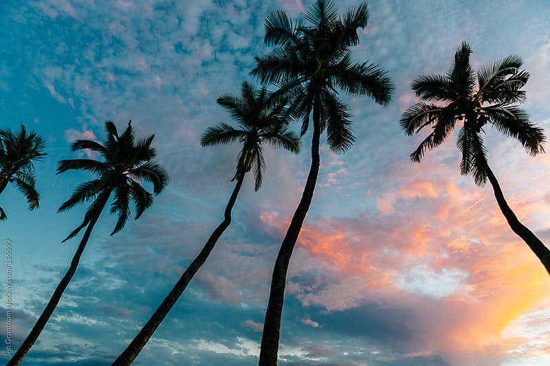 Palm Trees by Jen Grantham for Stocksy United