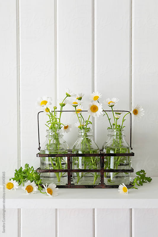 Daisies in small jars on shelf by Sandra Cunningham for Stocksy United