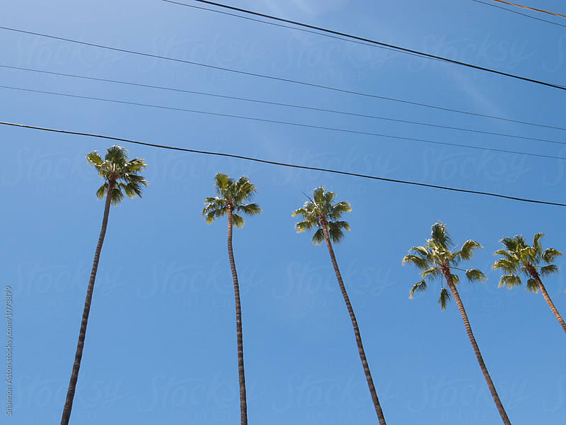Urban Palms, CA by Shannon Aston for Stocksy United