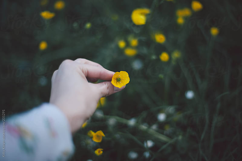 Picking a wild buttercup by Kitty Kleyn for Stocksy United