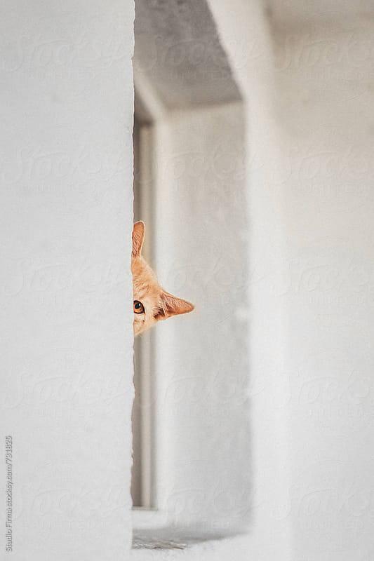 Cat peaking. by Studio Firma for Stocksy United