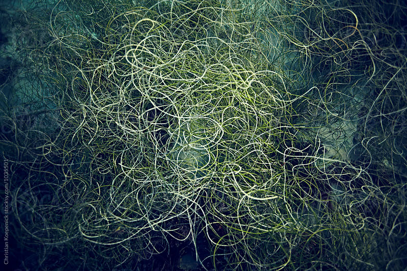 Sea grass Texture by Christian Koepenick for Stocksy United