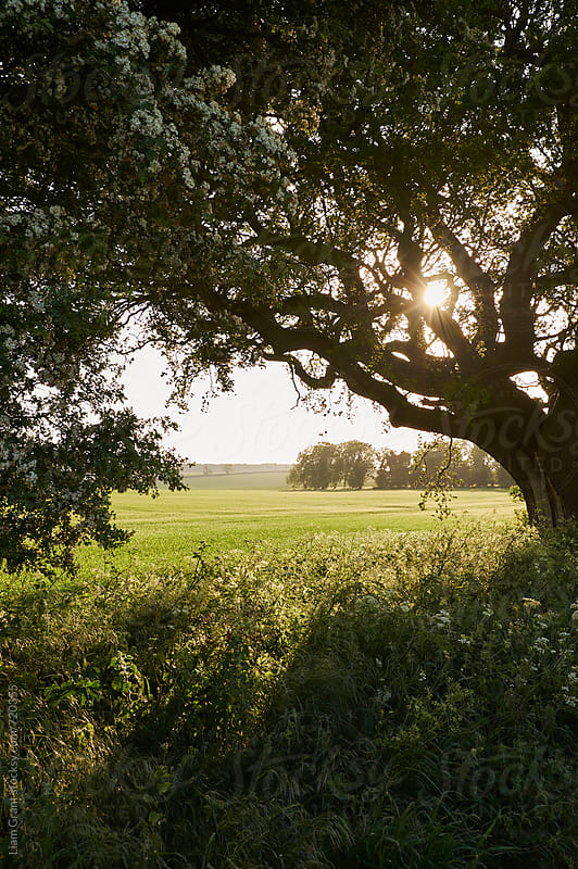 Sunset over a rural field framed by trees. Norfolk, UK. by Liam Grant for Stocksy United