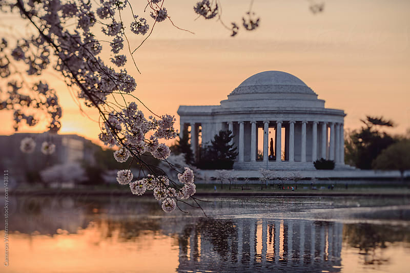 Cherry Blossoms and The Jefferson Memorial Tilt Shift by Cameron Whitman for Stocksy United