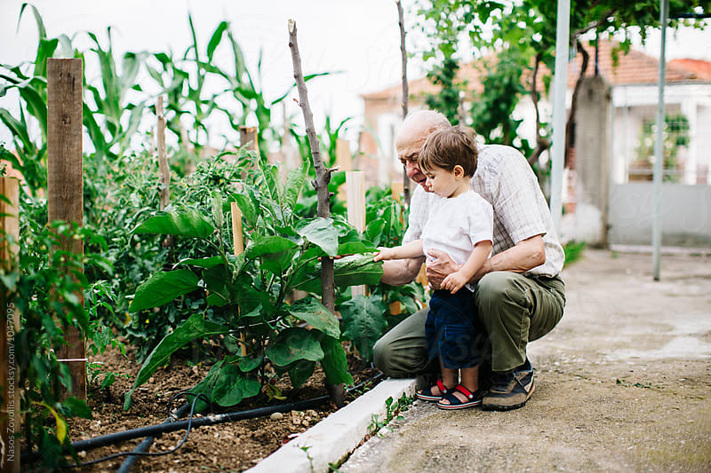 Grandfather and his grandson gardening by Nasos Zovoilis for Stocksy United