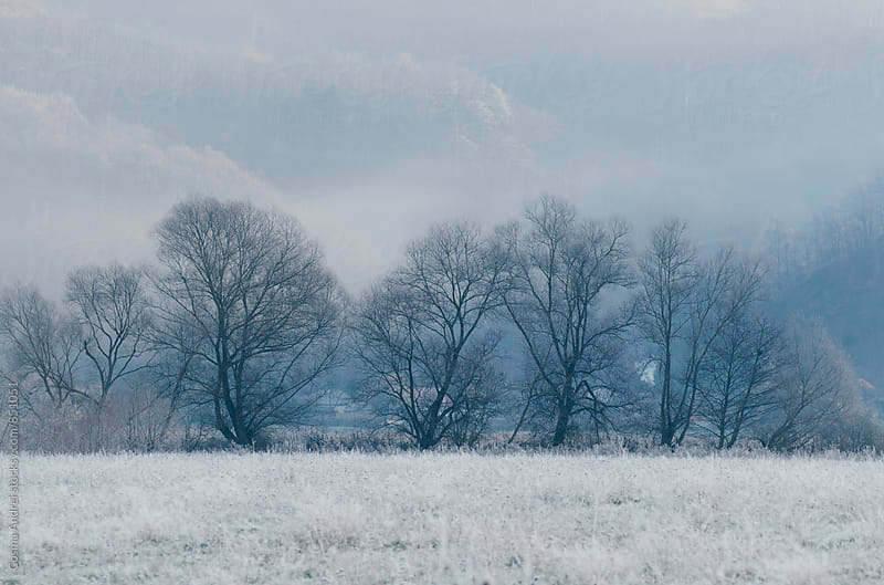 Trees on frozen meadow in morning by Cosma Andrei for Stocksy United