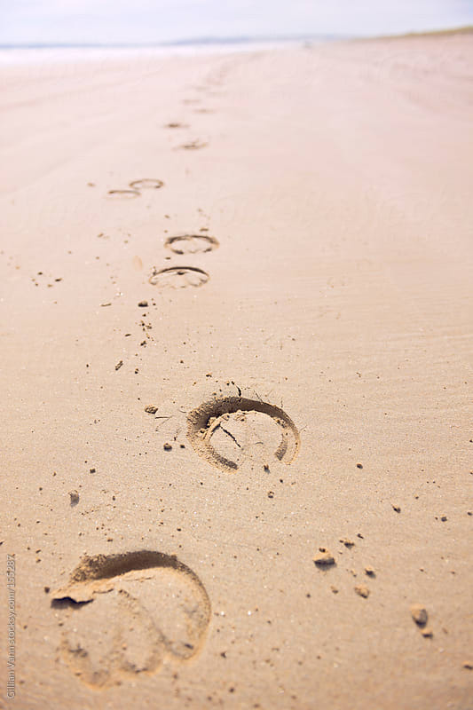 horse prints on the beach by Gillian Vann for Stocksy United