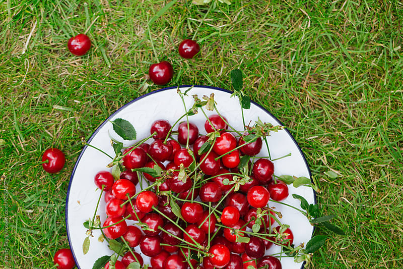Plate with scattered cherries on grass, overhead by Kirsty Begg for Stocksy United
