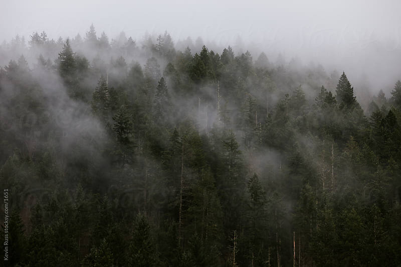Foggy Northwest Tree Tops by Kevin Russ for Stocksy United