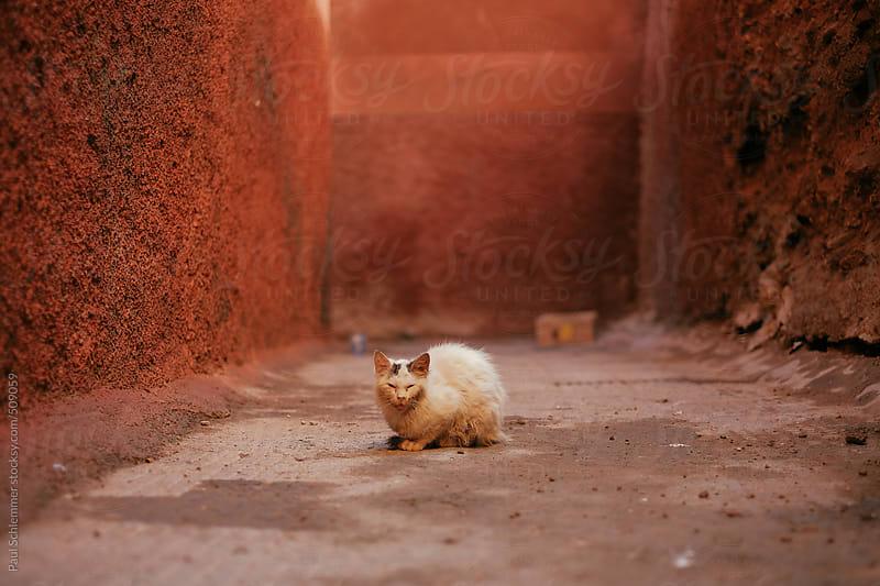 sick street cat by Paul Schlemmer for Stocksy United