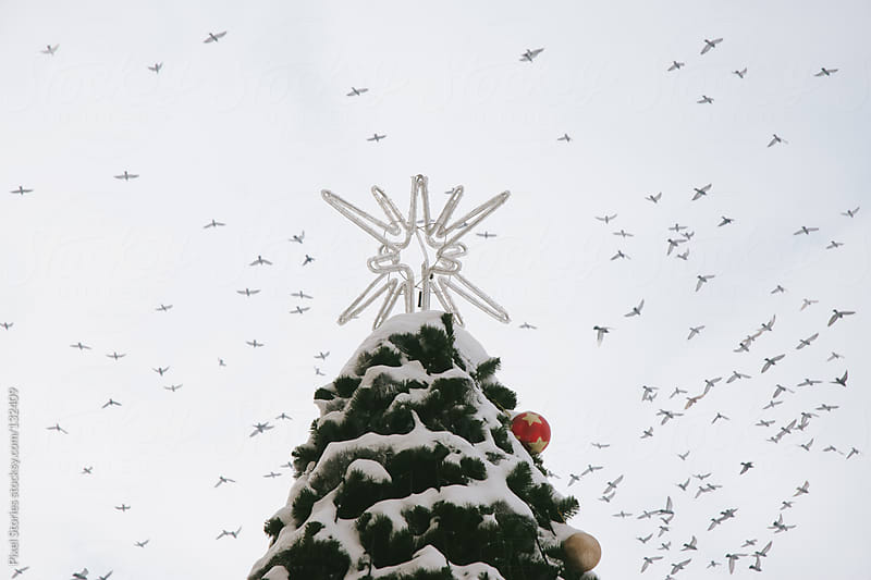 Christmas tree and birds by Pixel Stories for Stocksy United