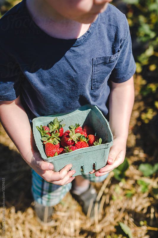 Young child holding basket of strawberries by Lindsay Crandall for Stocksy United