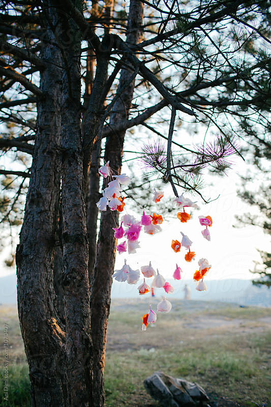 Party decoration hanging on tree  by Ani Dimi for Stocksy United