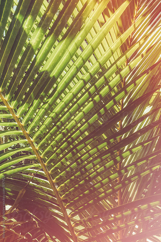 Tropical Palm Leaves Close Up by Alexander Grabchilev for Stocksy United