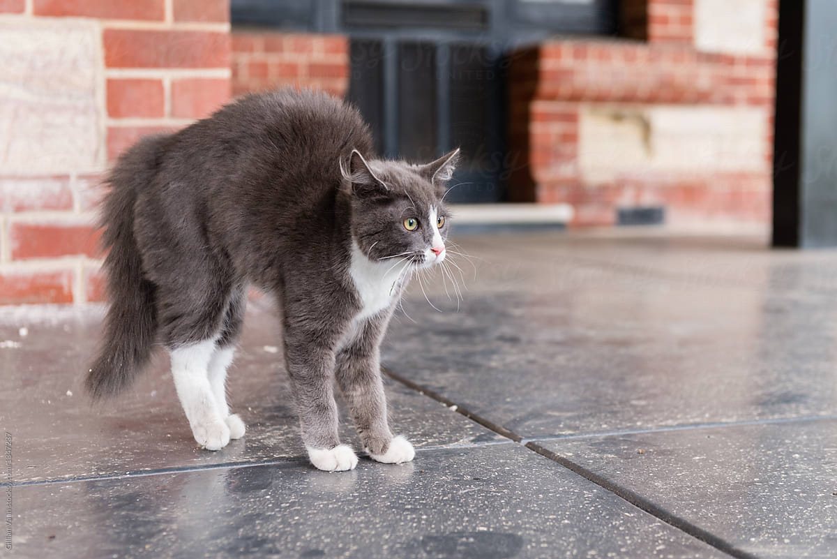 Image result for angry cat