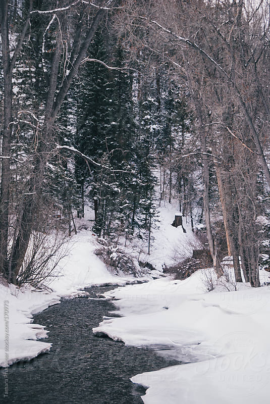 Snowy River Through Trees by Tamara Pruessner for Stocksy United