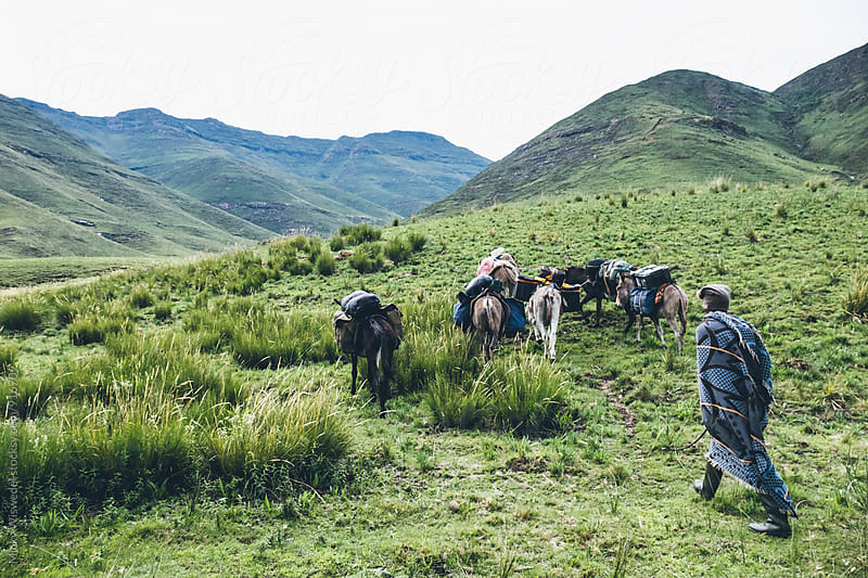 Basotho herdsman walking with a caravan of pack donkeys in the Lesotho highlands by Micky Wiswedel for Stocksy United