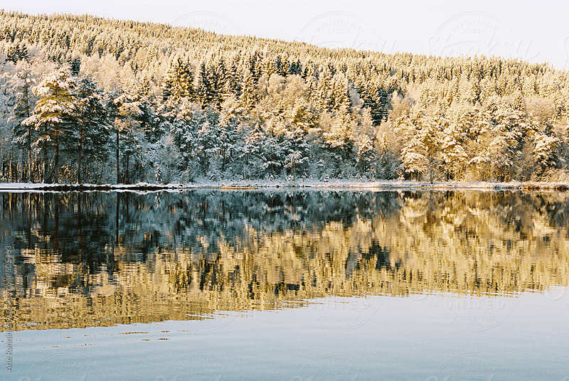 Distant trees in reflecting water at sunrise by Atle Rønningen for Stocksy United