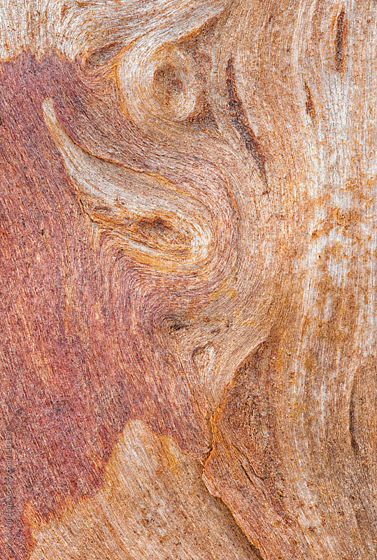 Wood grain patterns, closeup by Mark Windom for Stocksy United