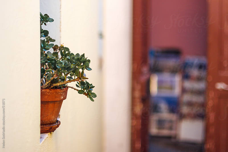 A plant in the window in Plaka, the historic center of Athens by Helen Sotiriadis for Stocksy United
