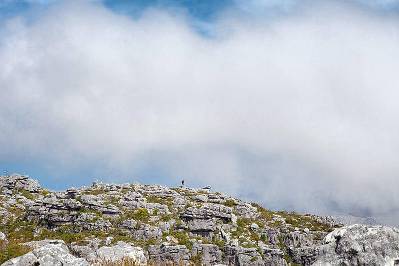 On Top Of Table Rock Mountain In  South Africa by Matthew Smith for Stocksy United