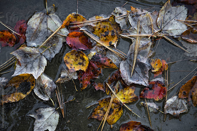 A collection of fallen autumn leaves and pine needles at the edge of a lake by Cara Dolan for Stocksy United