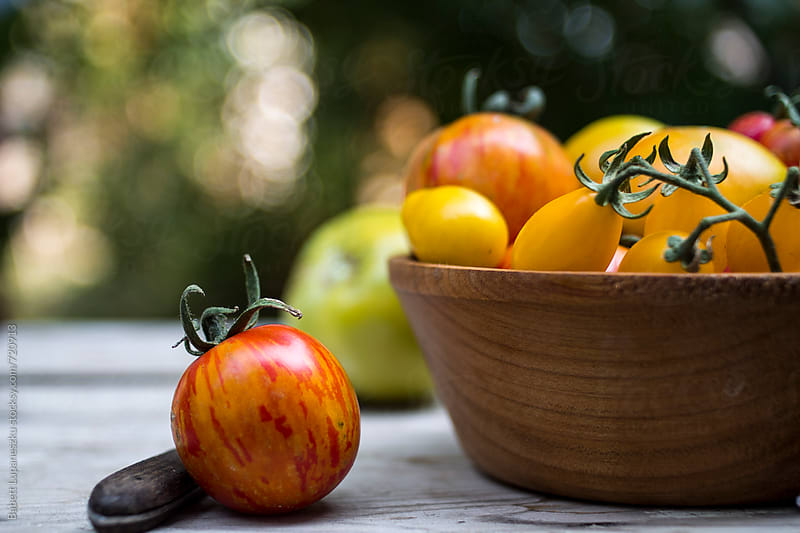 Different varieties of tomatoes in wooden bowl by Viktorné Lupaneszku for Stocksy United