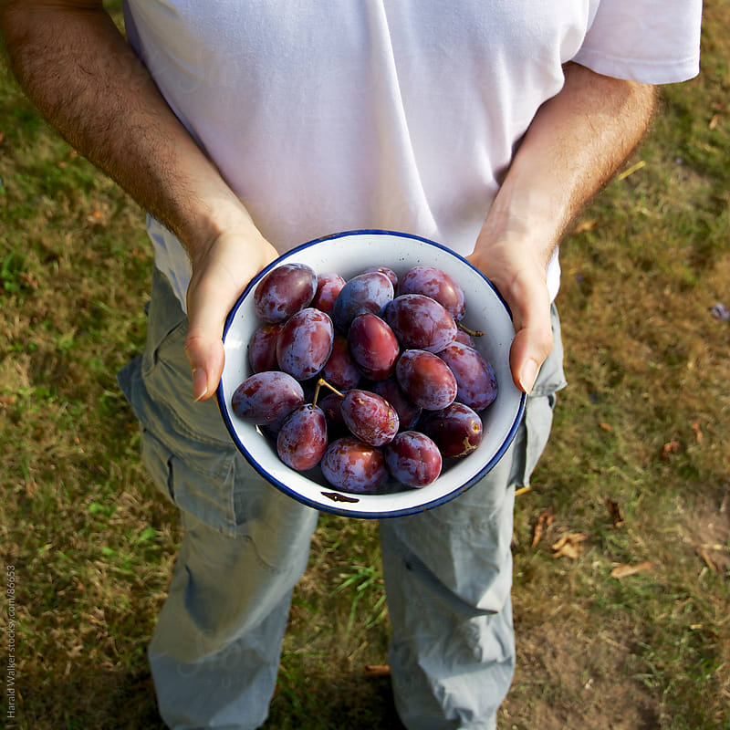Bowl of plums by Harald Walker for Stocksy United