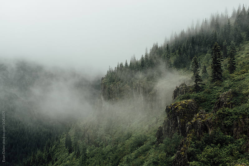 Foggy Washington Cliffs by Evan Dalen for Stocksy United
