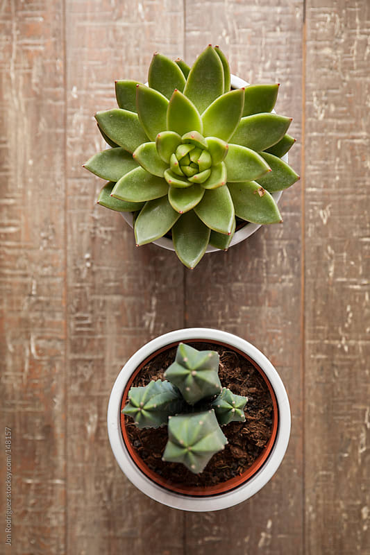 Succulent and cactus by Jon Rodriguez for Stocksy United