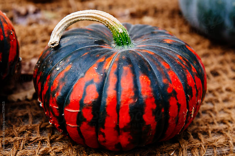 Red with black pumpkin by Andrey Pavlov for Stocksy United
