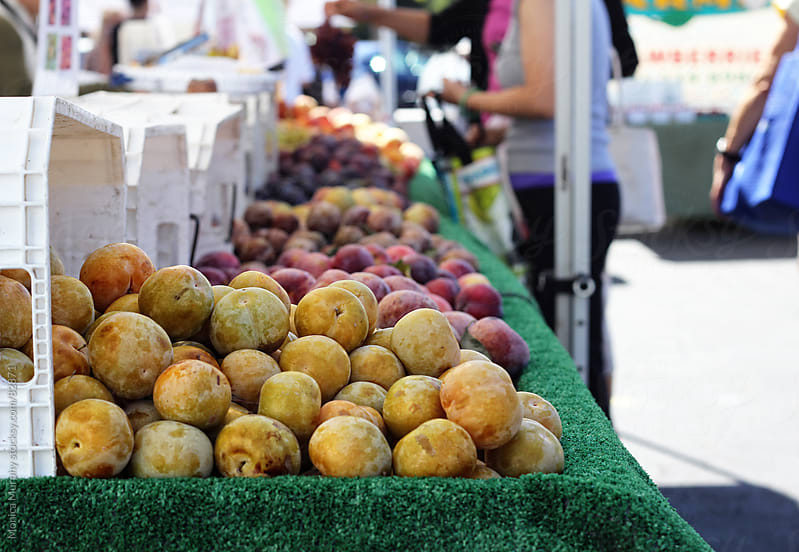 Golden plums at the local farmers market by Monica Murphy for Stocksy United