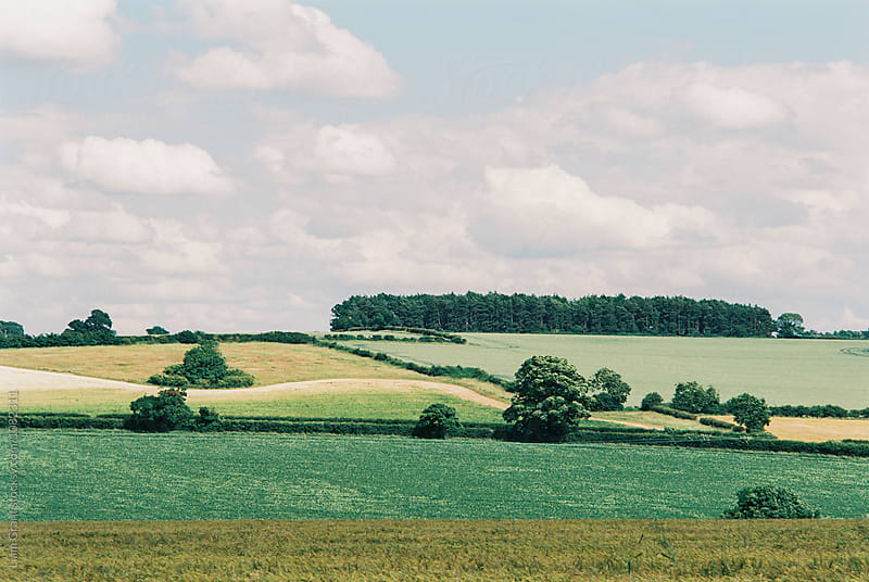Countryside in summer. Norfolk, UK. by Liam Grant for Stocksy United