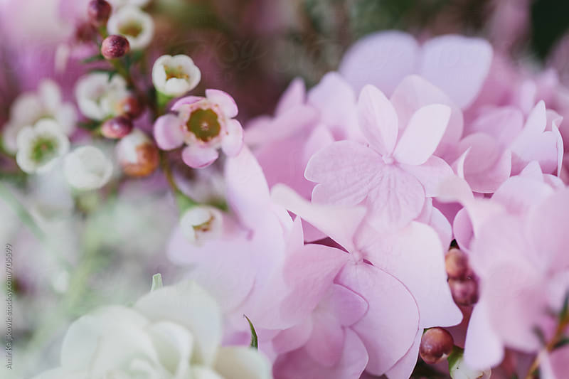 Fresh pretty pink hydrangea in a floral bouquet by Amir Kaljikovic for Stocksy United