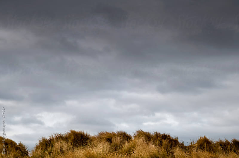 Grass dunes and ominous sky. by Darren Muir for Stocksy United