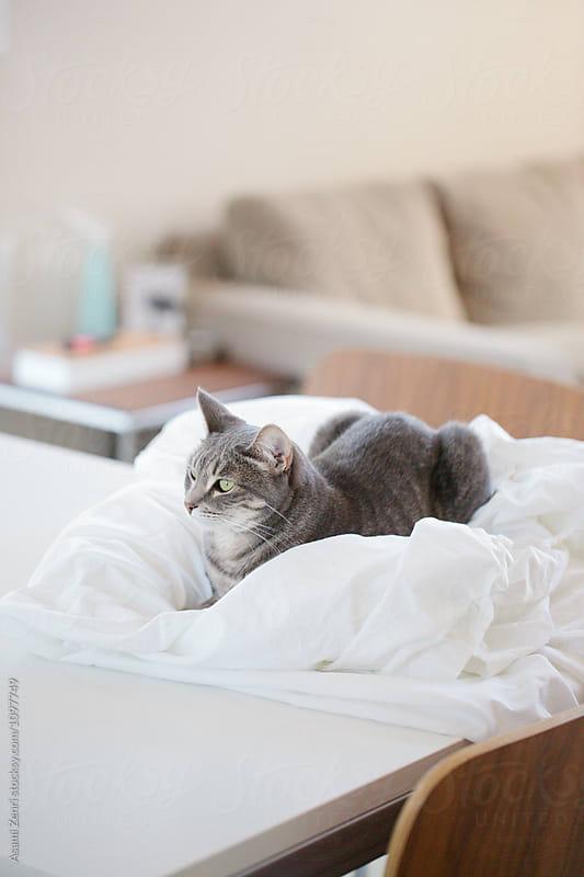 Cat resting  by Asami Zenri for Stocksy United
