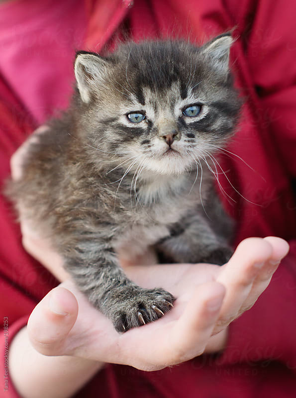 A newborn kitten with five toes by Tana Teel for Stocksy United