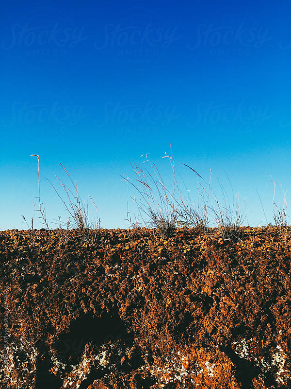 Profile of Grass Growing in Red Soil by Julien L. Balmer for Stocksy United
