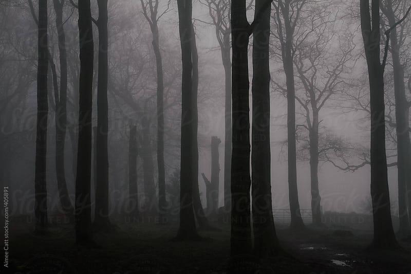 Fog in woods by Aimee Catt for Stocksy United
