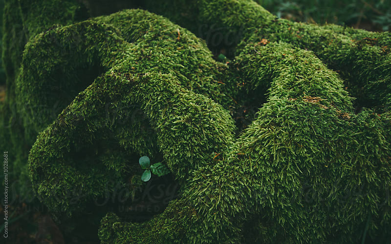 Green moss on roots by Cosma Andrei for Stocksy United