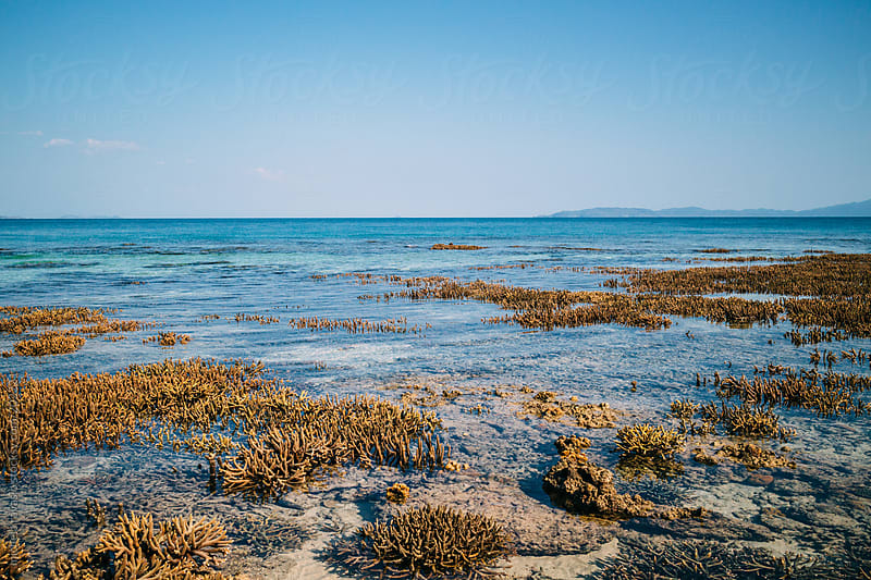 Seascape with low tide by michela ravasio for Stocksy United