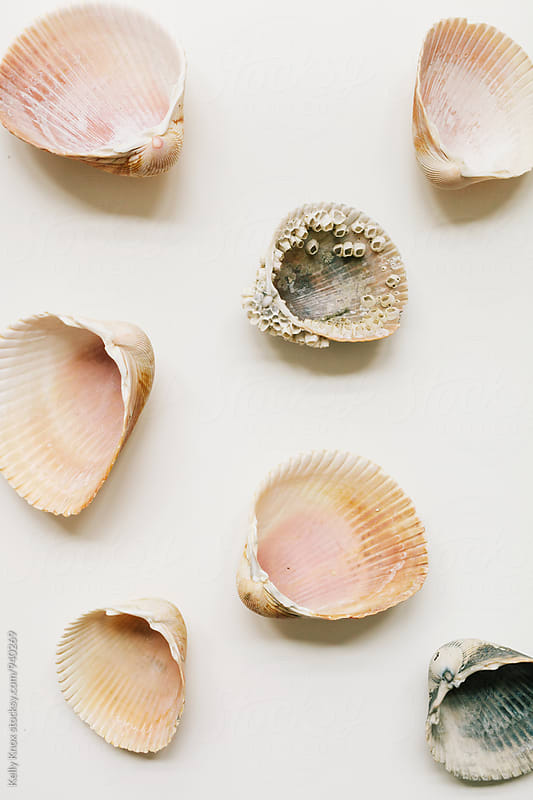 cockle shells spread out on white background by Kelly Knox for Stocksy United