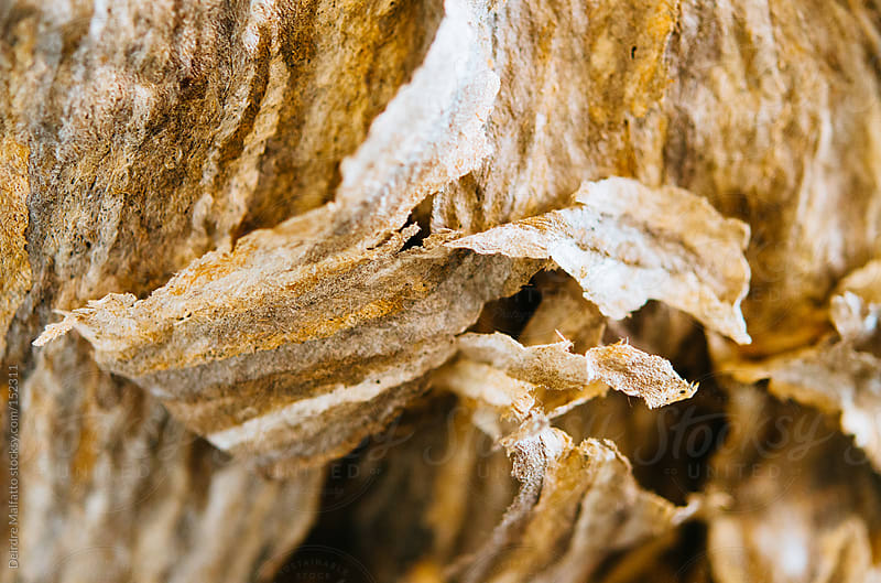 close-up of the paper-like structure of a hornet's nest by Deirdre Malfatto for Stocksy United