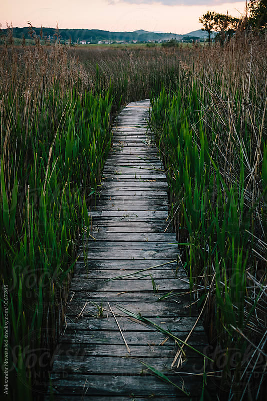 Wooden pathway crossing the swamp by Aleksandar Novoselski for Stocksy United