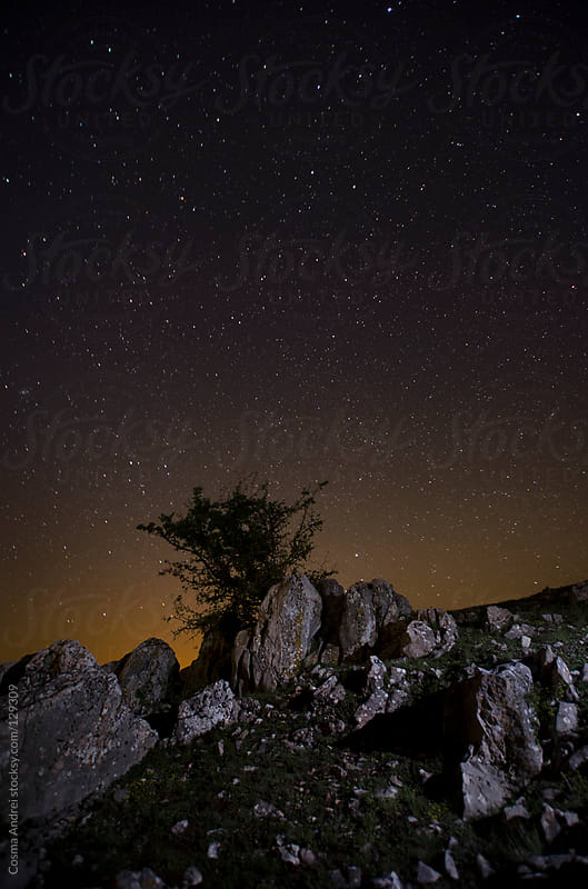 Tree and rocks under night sky with stars by Cosma Andrei for Stocksy United