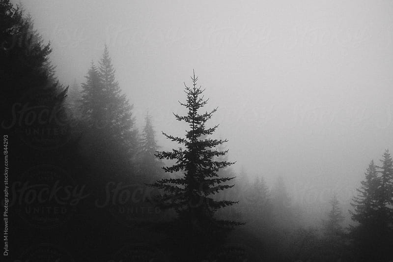 Tree in the Forest by Dylan M Howell Photography for Stocksy United