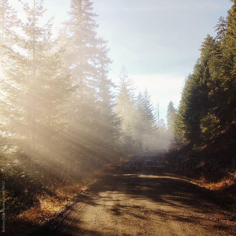 Foggy Road by Bethany Olson for Stocksy United