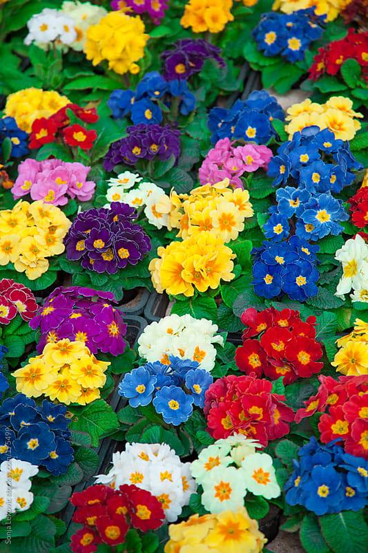 flowers background by Sonja Lekovic for Stocksy United