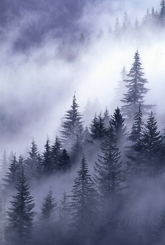 fog mist rising through evergreens pines firs spruce in Cascades of Washington by Ron Mellott for Stocksy United