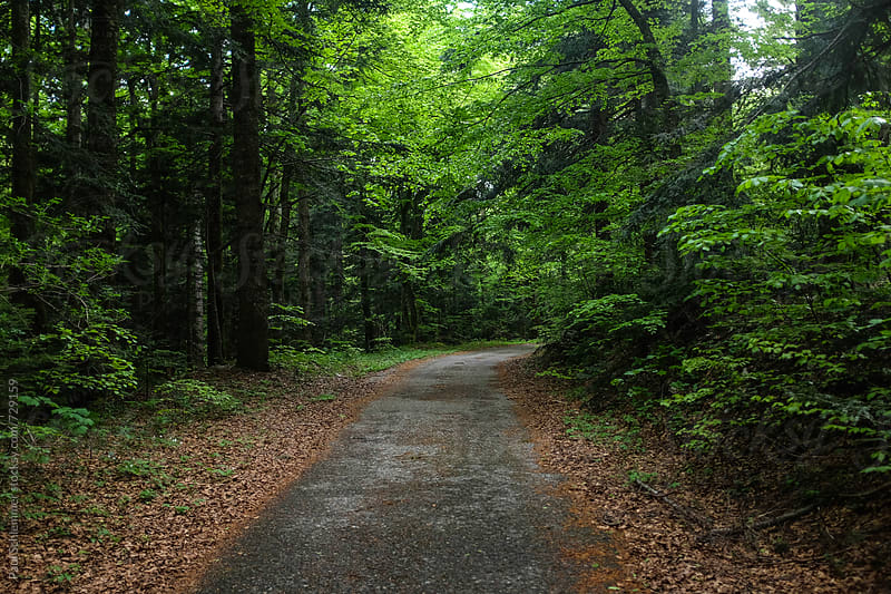 empty road through green forest by Paul Schlemmer for Stocksy United